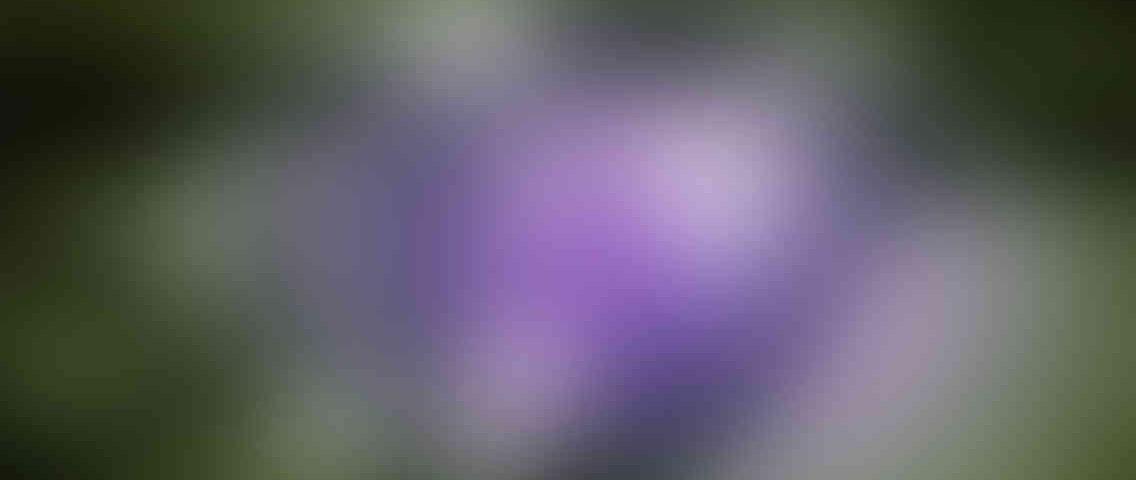 http://delhiwebsitedesigning.in/wp-content/uploads/2013/03/standout_slide_3_v01-1136x480.jpg